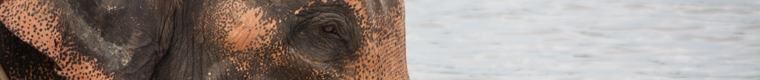 closeup of elephant's eye