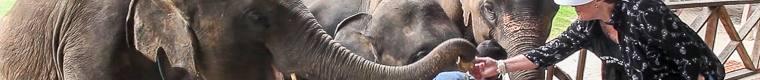 woman feeding an elephant