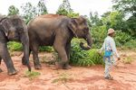 two elephants walking with mahout