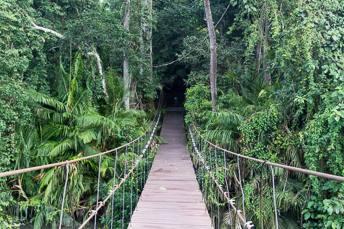 suspension bridge in the jungle
