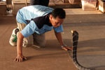 man face to face with a cobra