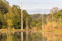 tree-lined pond