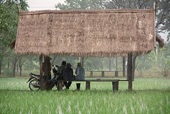 people sitting under thatch roof shelter in rice field during rain