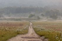 road through a foggy meadow