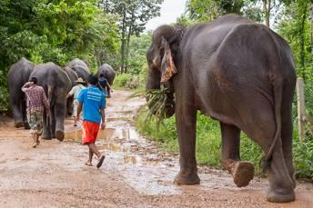 row of elephants walking in forest