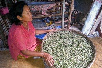 woman with silk worms